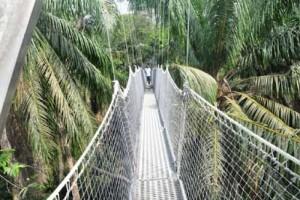 Canopy walkway 300x200 Lekki Conservation Centre