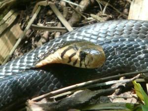 leki 300x225 Lekki Conservation Centre