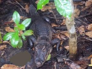 lekii 300x225 Lekki Conservation Centre