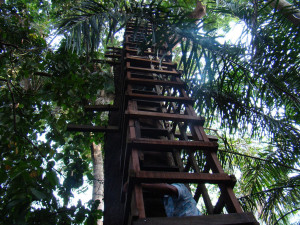 lekki 4 300x225 Lekki Conservation Centre